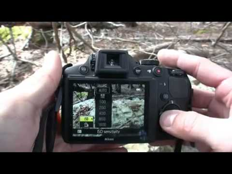 Electronic slr Nikon D4 Complete Evaluation